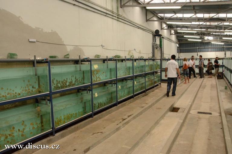"""Pohled do jejich """"velké farmy"""" kde je vidět již prostor připravený na další řady akvárií"""